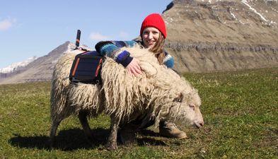 Sheep View zamiast Street View: Wyspy Owcze promują się przez Google